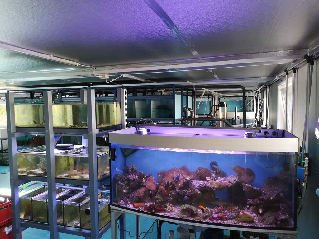 Nemo-Aquaristik Eingangsbereich
