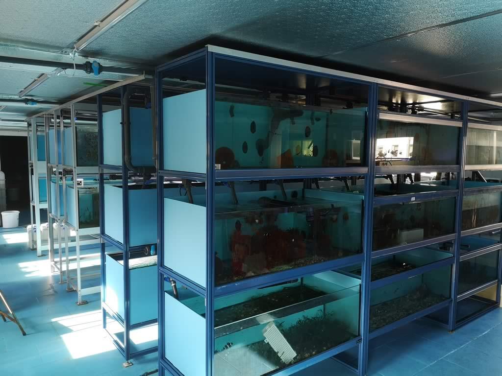 Nemo-Aquaristik Zuchtbecken